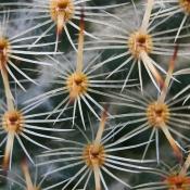 Kaktus mit Zwischenringen und EF-S 18-55